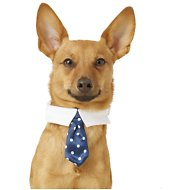 Frisco Polka Dot Pet Neck Tie and Collar, Navy, X-Small/Small