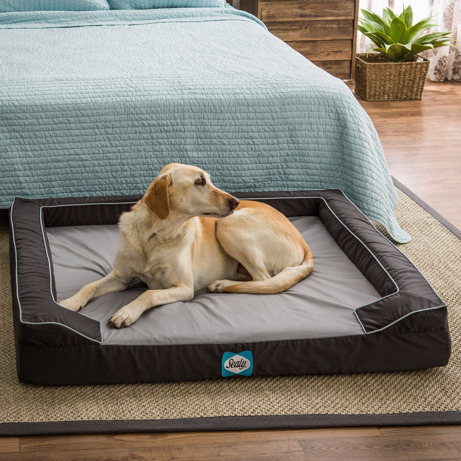 sealy lux premium orthopedic dog bed grey x large. Black Bedroom Furniture Sets. Home Design Ideas