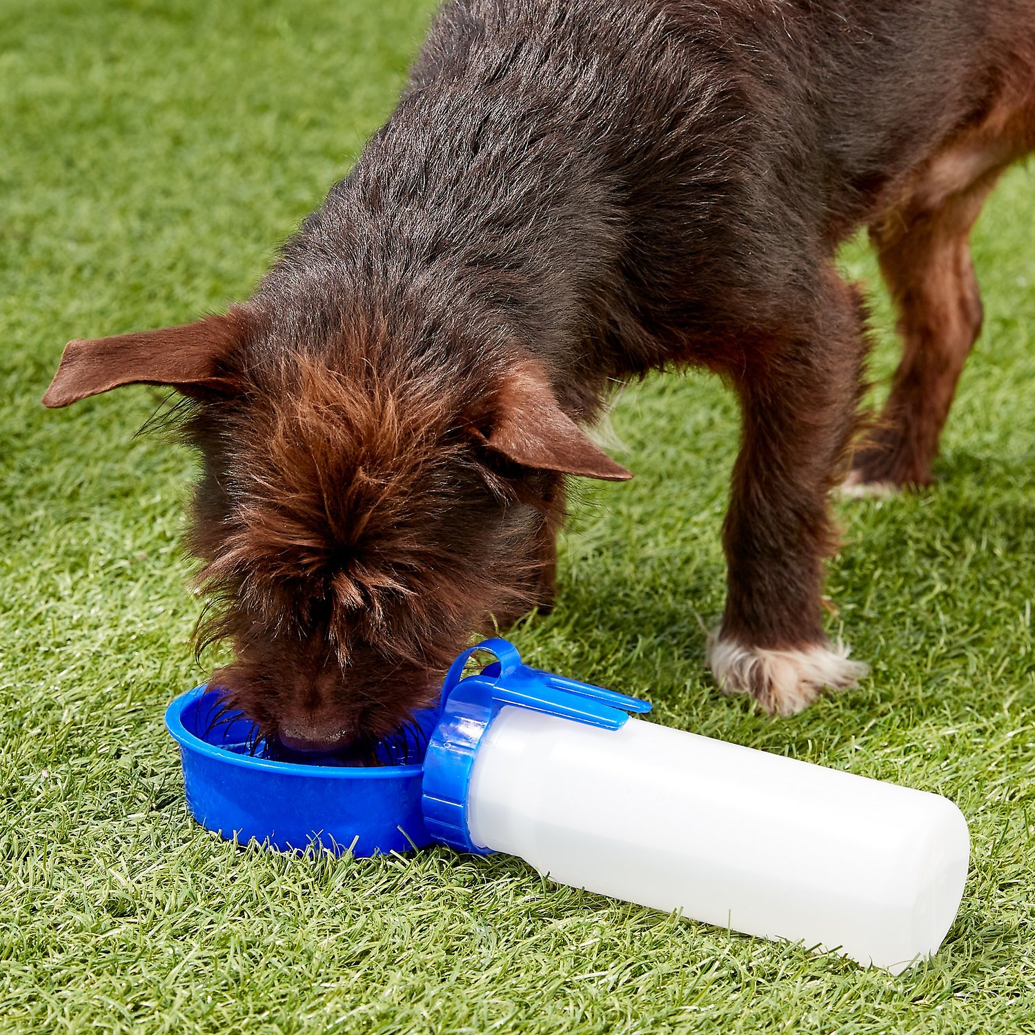 Portable Dog Water Bottle >> Water Rover Portable Dog & Cat Water Bottle & Bowl, Dark Blue, Medium - Chewy.com