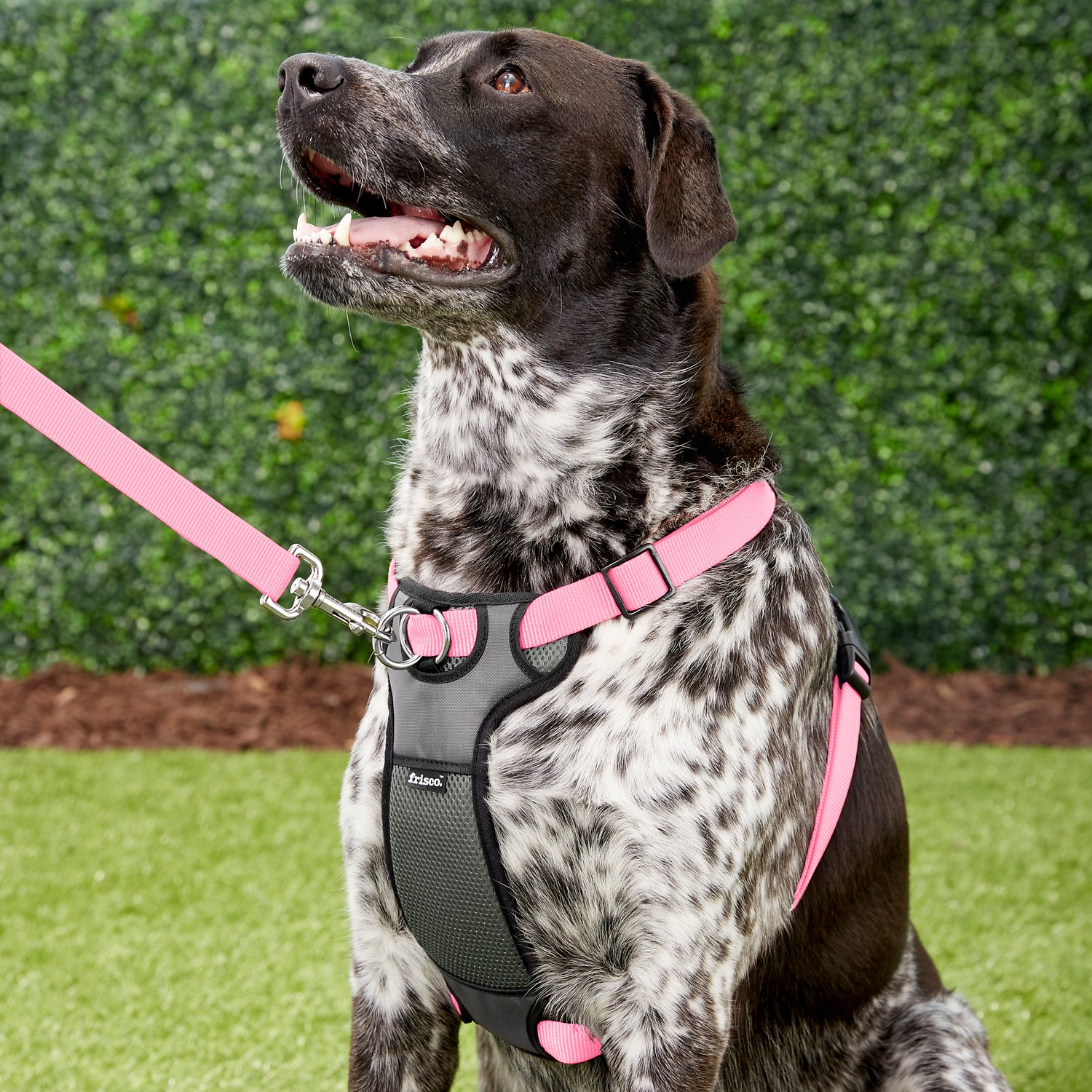 Frisco Padded No Pull Front Lead Dog Harness  Pink  32