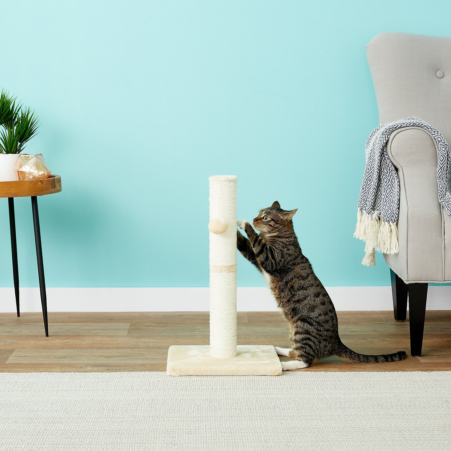 Frisco 21-in Cat Scratching Post with Toy, Cream forecast