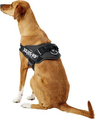 K9-Powerharness Julius