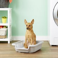 Puppy Pan Dog, Cat & Small Animal Litter Pan, Gray, Small