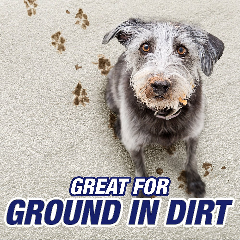 Resolve Pet Carpet Cleaner Moist Powder Review Home Co