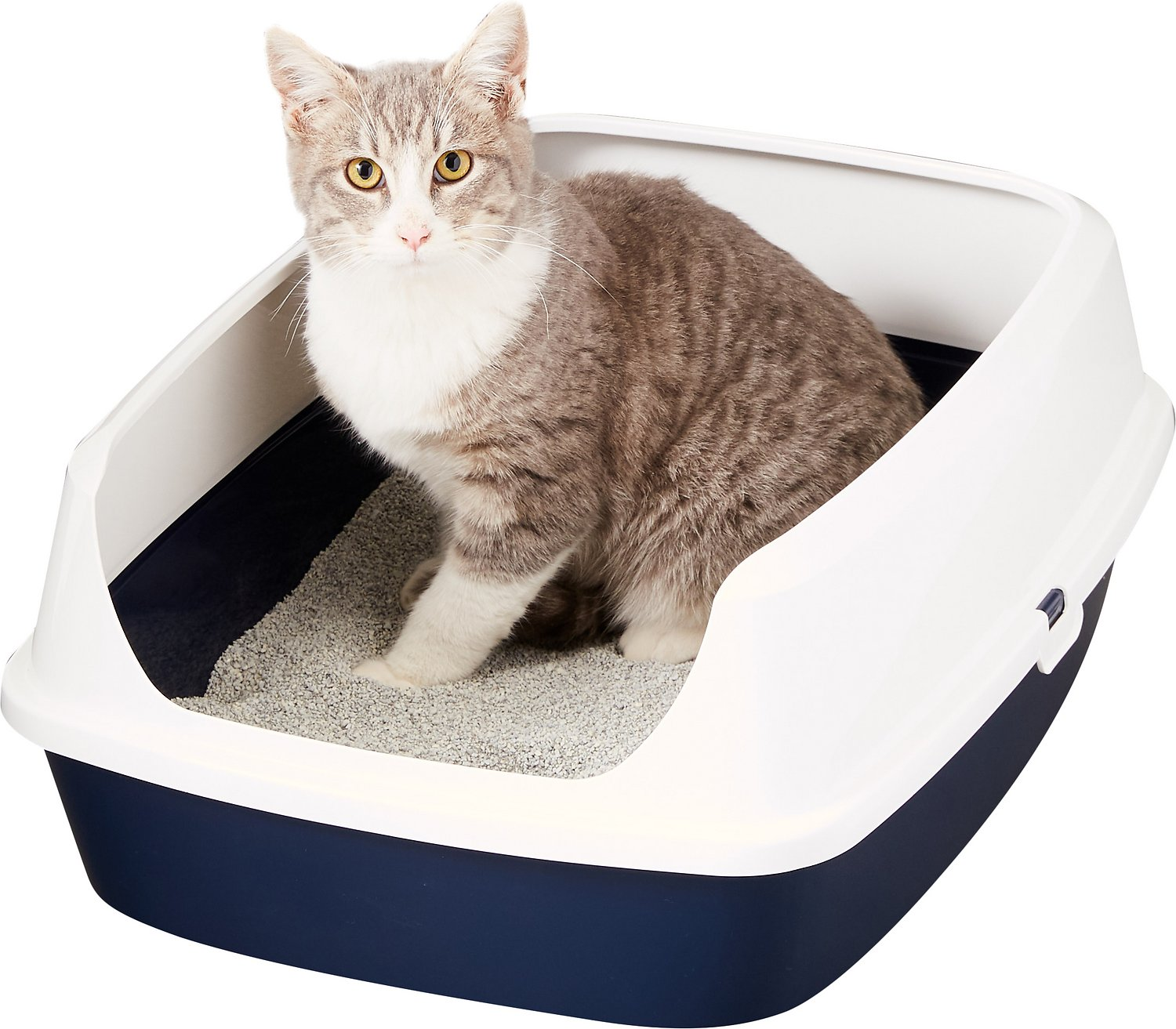 Image result for cat litter box