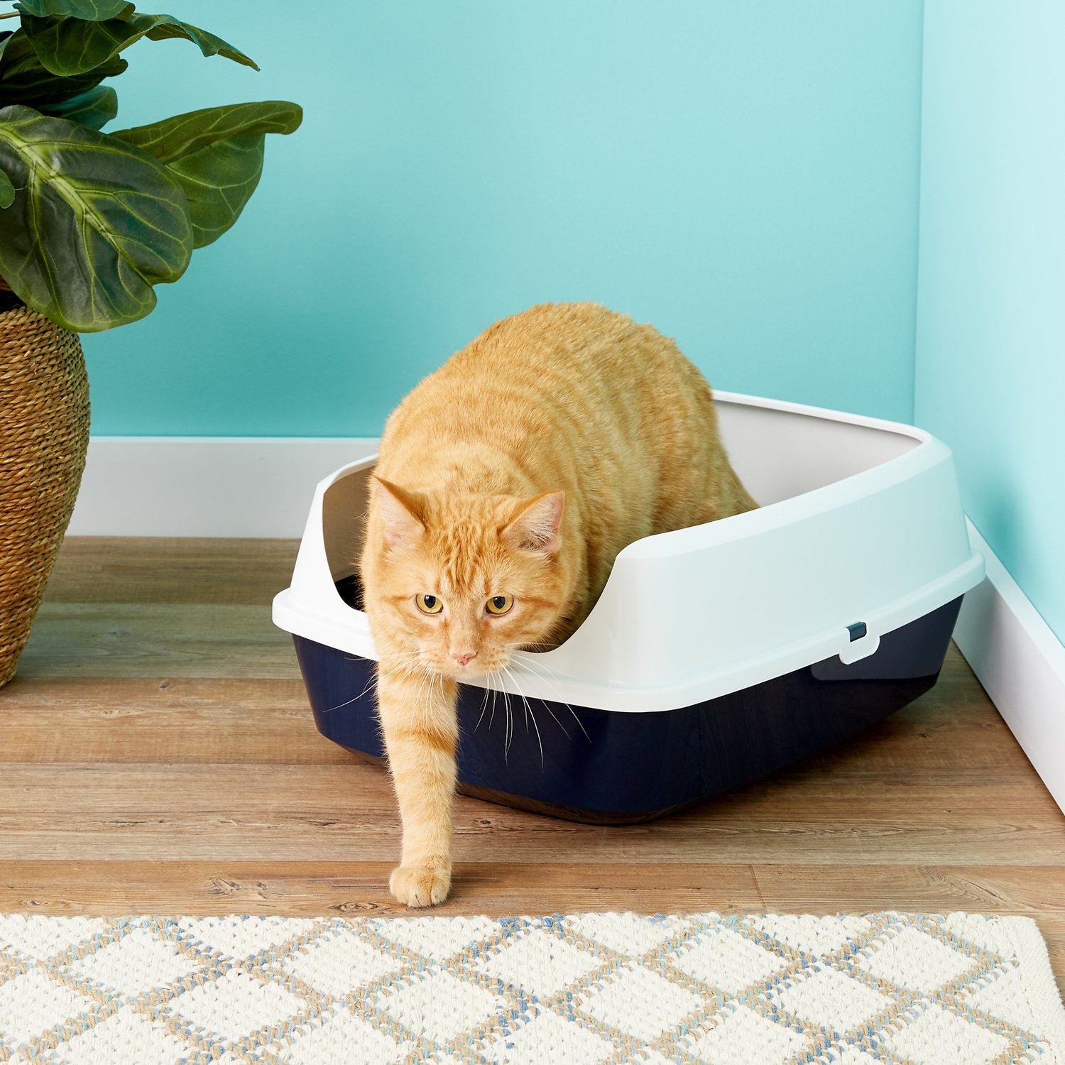 Frisco Open Top Cat Litter Box With Rim Navy Large 19 In