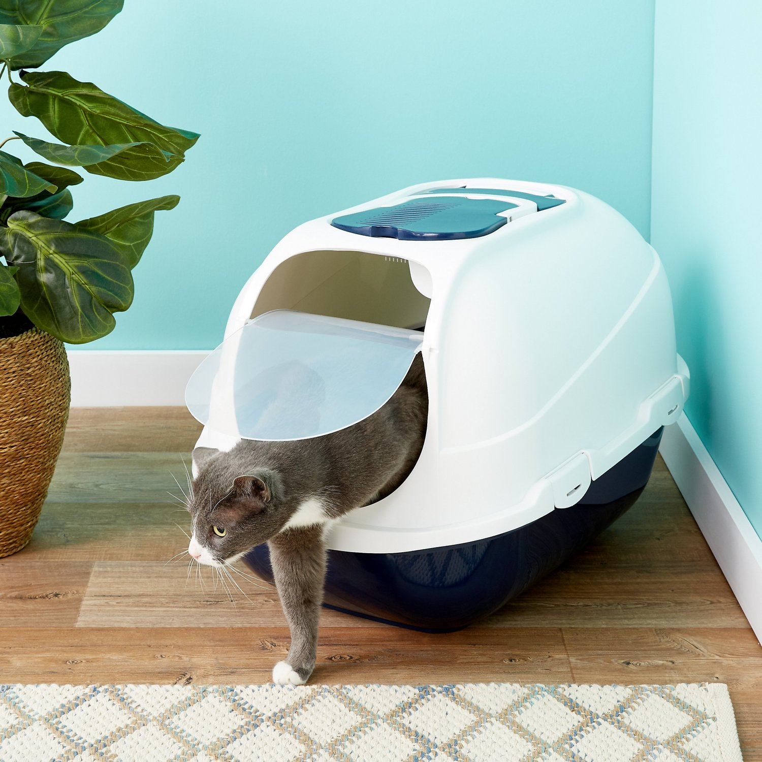 Cat Allergy And Hooded Litter Box