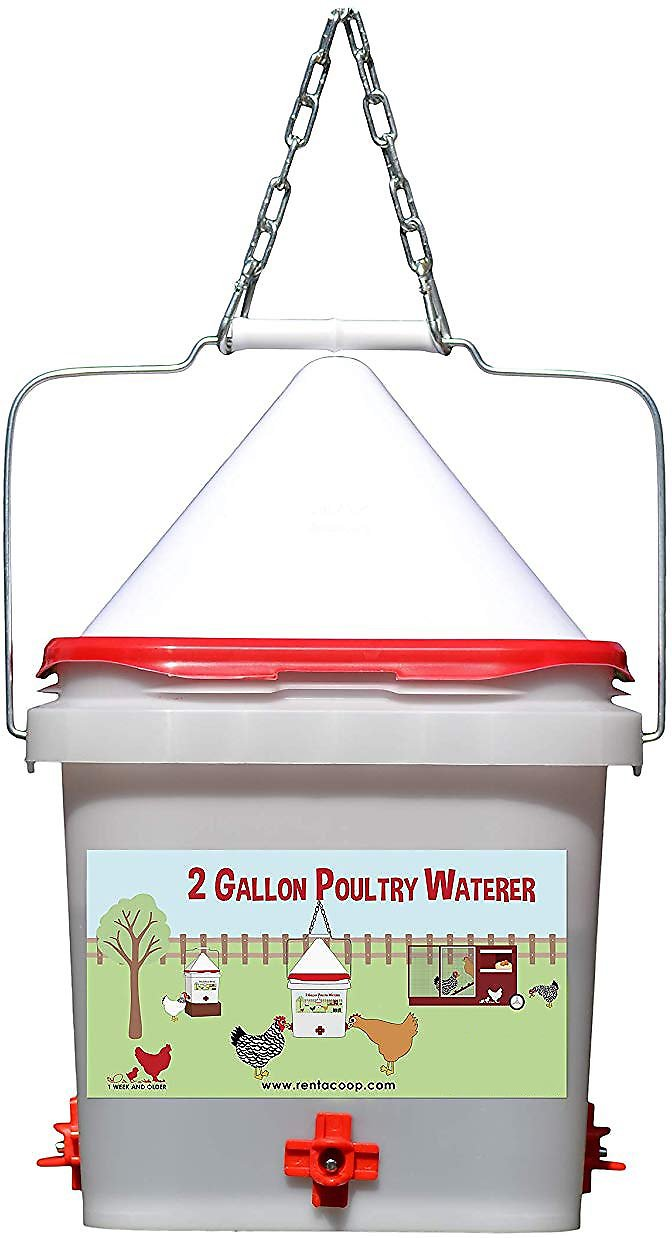 34a559543fe9a RentACoop Square 4-Port Chicken Waterer with No-Roost Cap