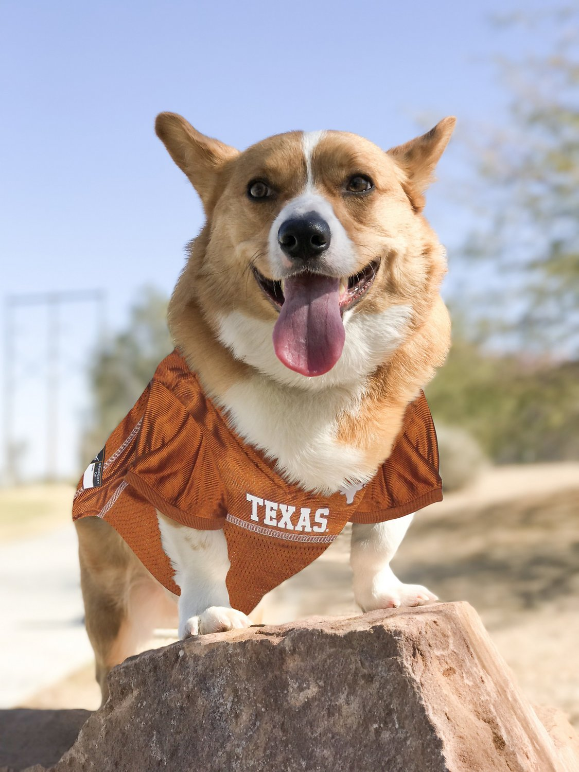 Football Jerseys for Dogs /& Cats Available in 50 Collegiate Teams /& 7 Sizes Pets First NCAA PET Apparels Basketball Jerseys