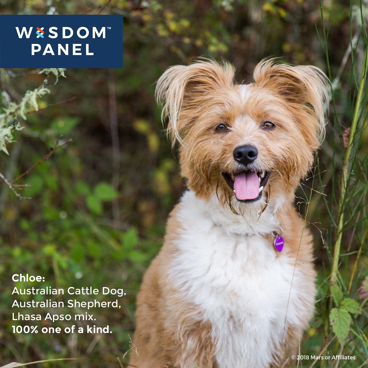 Wisdom Panel Health Breed Amp Health Identification Dog Dna