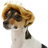 Rubie's Costume Company Dog Pawlitical Billionaire Wig, Small/Medium