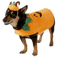 Frisco Pumpkin Dog & Cat Costume, Large