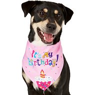 Frisco Dog & Cat The Birthday Girl Bandana, Medium/Large