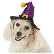 Frisco Witch Hat for Dog & Cat, Small/Medium
