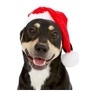 Frisco Holiday Santa Hat Pet Costume, Medium/Large
