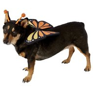 Frisco Monarch Butterfly Dog & Cat Costume, Large
