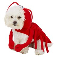 Frisco Lobster Dog & Cat Costume, X-Small