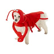 Frisco Lobster Dog & Cat Costume, Medium