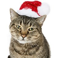 SimplyCat Sparkle Santa Cat Hat