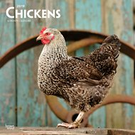 Chickens 2019 Wall Calendar