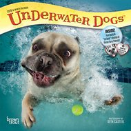 Underwater Dogs 2019 Mini Wall Calendar