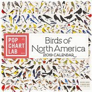 Birds of North America 2019 Wall Calendar