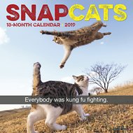 Snap Cats 2019 Wall Calendar