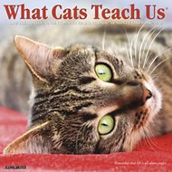 What Cats Teach Us 2019 Wall Calendar