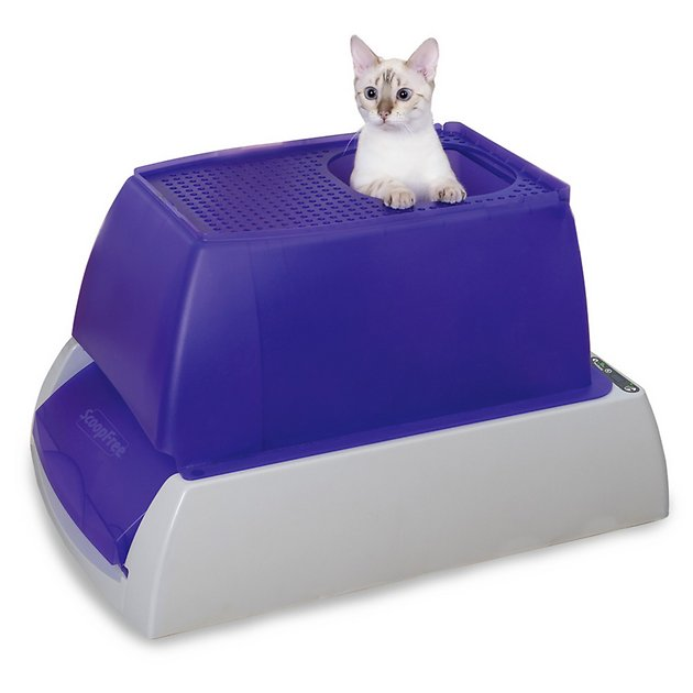 Scoopfree Top Entry Ultra Automatic Cat Litter Box Chewy Com