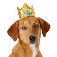 Frisco Happy Birthday Dog & Cat Crown, X-Small/Small