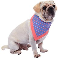 Blueberry Pet Perfect Polka Dots Bandana Dog Collar, Small