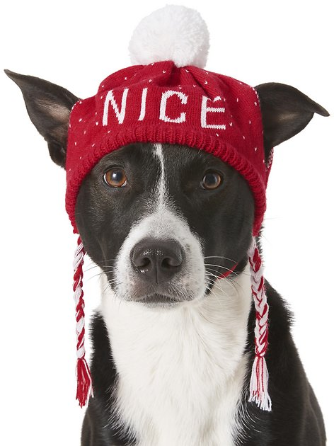 Frisco Naughty Nice Dog Amp Cat Knitted Hat Medium Large
