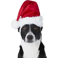 Frisco Deluxe Holiday Dog & Cat Santa Hat
