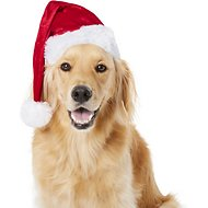 Frisco Deluxe Holiday Santa Hat Dog & Cat Costume, X-Large/XX-Large