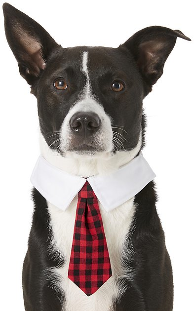 frisco-pet-neck-tie-and-collar by frisco