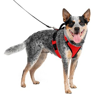 PetSafe EasySport Nylon Reflective Back Clip Dog Harness, Red, Medium: 26 to 32-in chest; Comfort is important for dogs when out for a walk and PetSafe EasySport Harness will keep your pup feeling secure. This harness is padded for a comfortable fit and the elasticized neckline will conform to your furry friend. It also features two snap buckles which makes this harness easy to get on and off. For pet parents, the top handle allows for easy control in case you need to grab your paw-tner quickly. Fully adjustable and made of nylon, PetSafe EasySport Harness is a cozy yet sturdy way to take your dog out and about.