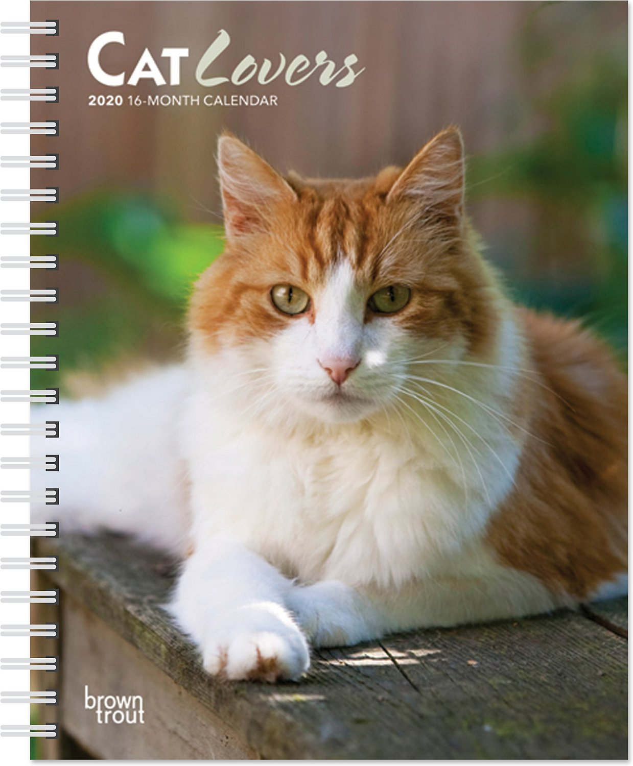 Calendrier Om 2020 16.Cat Lovers 2020 16 Month Weekly Calendar Chewy Com
