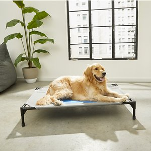 Best Overall Elevated Dog Bed