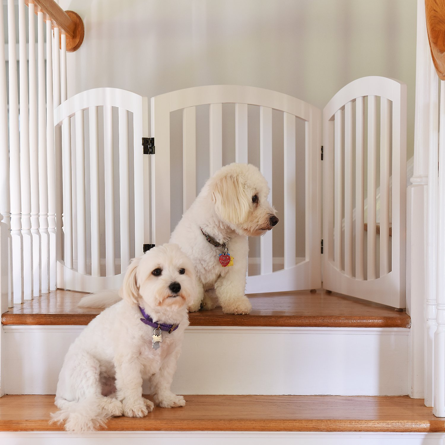 Arf Pets Free Standing Wood Dog Cat Gate White Chewy Com