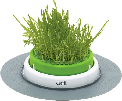 Catit Senses 2 0 Cat Grass Planter Chewy Com
