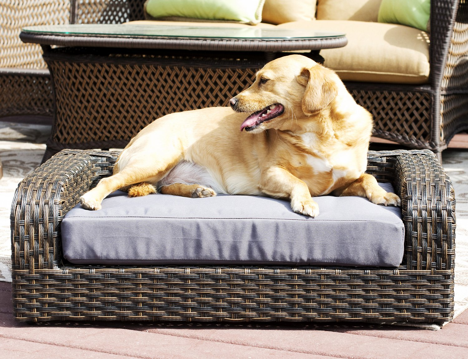 Iconic Pet Rattan Sofa Cat Dog Bed W Removable Cover Caramel Mocha Chewy Com