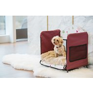 Petique Comfort Zone Elevated Dog Bed