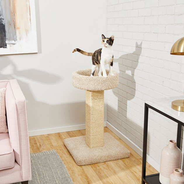 Frisco 32 In Real Carpet Wooden Cat Tree Beige Chewy Com