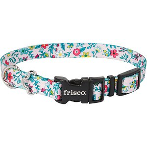Frisco Spring Floral Polyester Dog Collar, Small: 10 to 14-in neck, 5/8-in wide