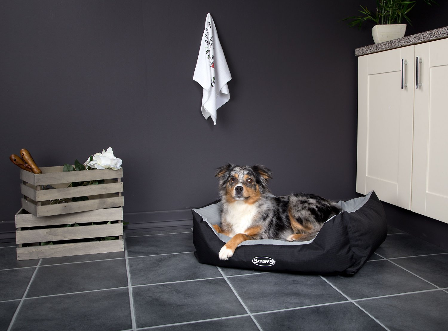 Expedition Box Dog Bed Graphite x Size Scruffs XL