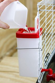 64 oz Automatic Refill Chick Cup Drinker