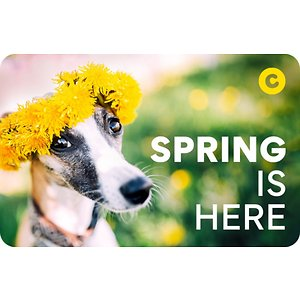 Chewy eGift Card, Spring Is Here, $100