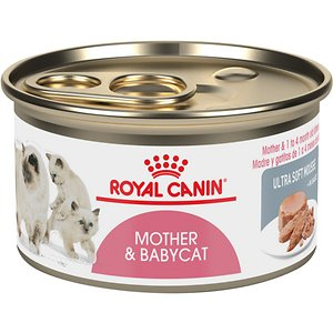 Best Kitten Food 2019 Wet Canned Amp Dry Reviews Amp Guides