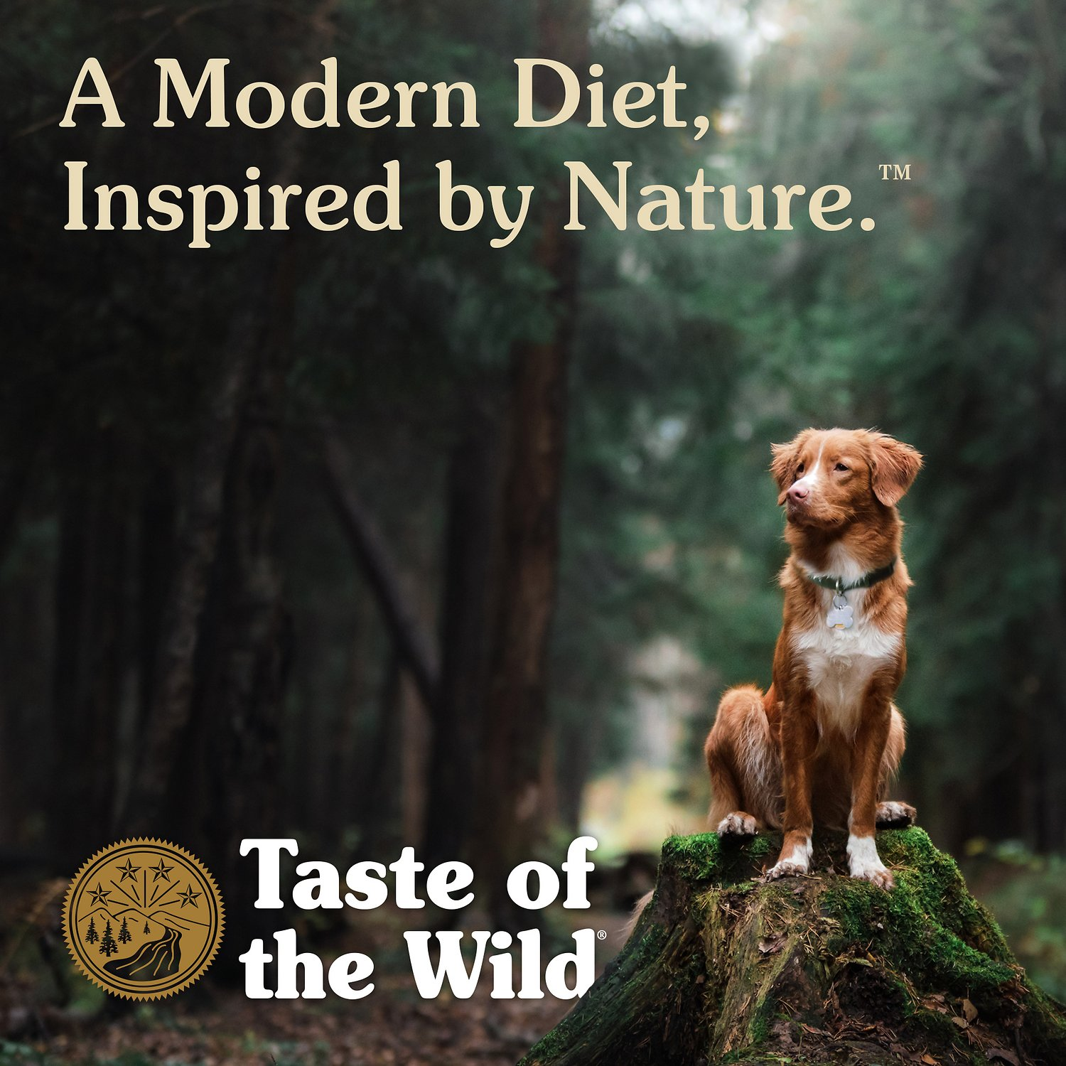 Taste Of The Wild Salmon Dog Food Ingredients