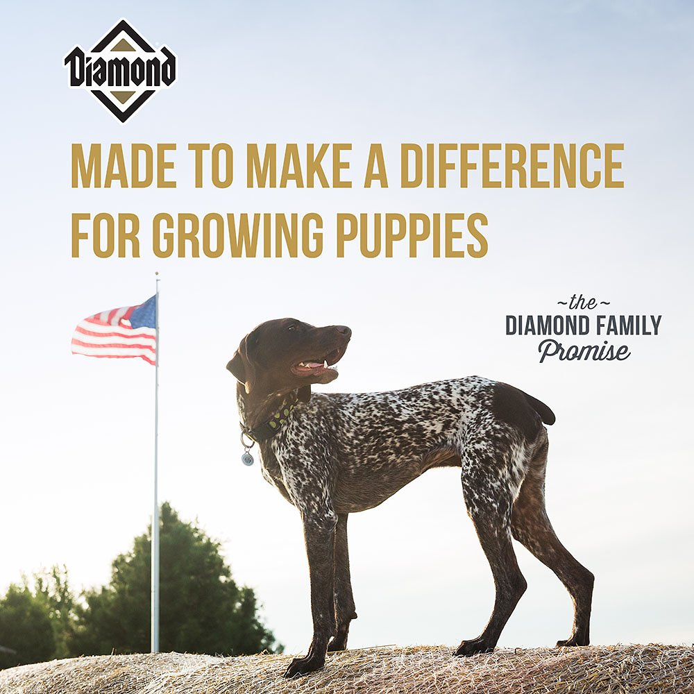 Diamond puppy formula dry dog food 40 lb bag chewy video geenschuldenfo Gallery